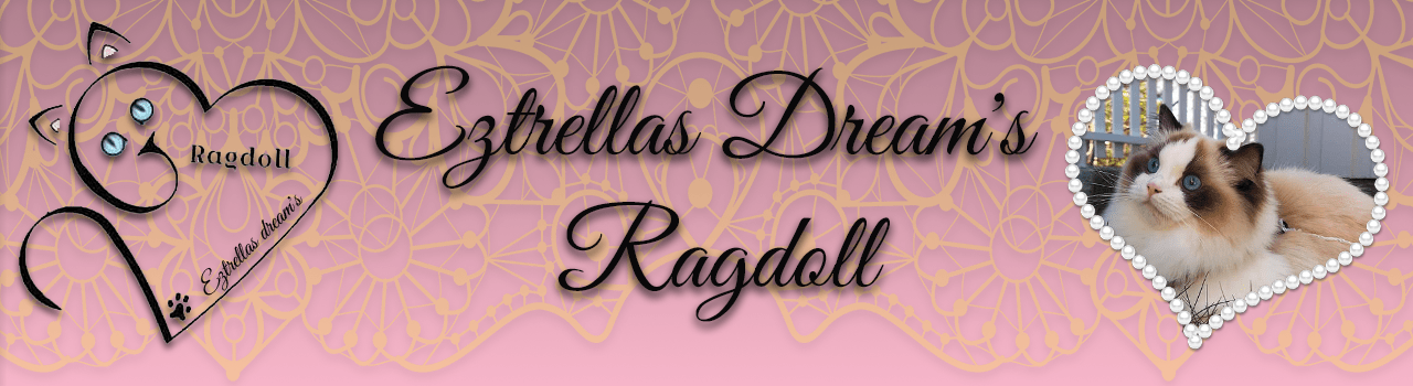 NO*Eztrellas Dream's Ragdoll